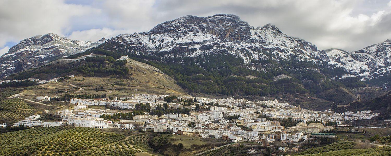 Compra Online los mejores Aceites de Oliva Virgen Extra con D.O. Sierra de Cazorla
